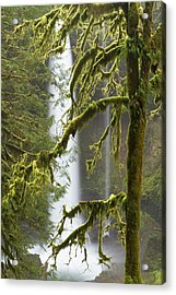 A Moss Covered Tree Frames North Falls Acrylic Print by William Sutton