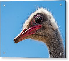 A Mug Only A Mother Could Love. Acrylic Print by Jean Noren