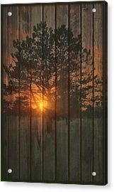 A New Tree Acrylic Print by Tom York Images
