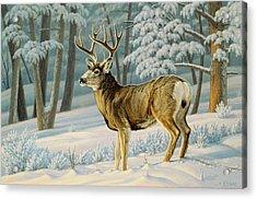 A Nice Buck Acrylic Print by Paul Krapf