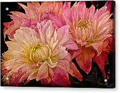 A Pastel Bouquet Acrylic Print by Chris Lord