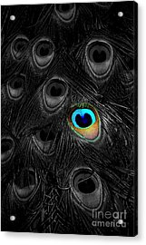 A Peacock Feather Acrylic Print by Mike Nellums