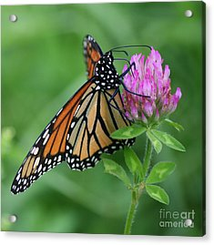 A Picture Of Nectar Acrylic Print by Neal Eslinger