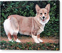 A Portrait Of Pickle Acrylic Print by Sandra Chase