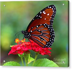 A Queen Acrylic Print by Marty Fancy