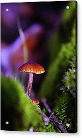 A Red Mushroom  Acrylic Print by Jeff Swan