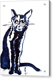 A Sketchy Cat Acrylic Print by Beverley Harper Tinsley