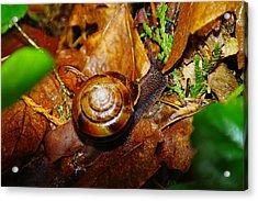 A Slow Snail Acrylic Print by Jeff Swan