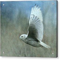 A Snowy Flight Acrylic Print by Angie Vogel
