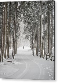A Solitary Winter Wanderer Acrylic Print by Dick Wood