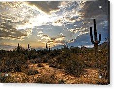 A Sonoran Desert Sunset  Acrylic Print by Saija  Lehtonen