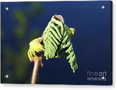 A Spring Beginning  Acrylic Print by Neal Eslinger