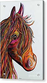 A Stick Horse Named Amber Acrylic Print by Eloise Schneider
