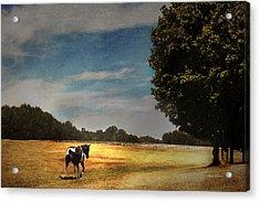 A Summer Stroll Acrylic Print by Jillian  Chilson