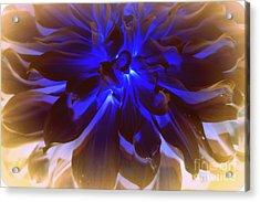 A Touch Of Blue Acrylic Print by Dora Sofia Caputo Photographic Art and Design