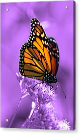 A Touch Of Summer  Acrylic Print by Cathy  Beharriell