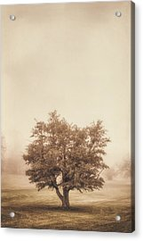 A Tree In The Fog Acrylic Print by Scott Norris