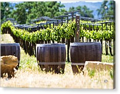 A Vineyard With Oak Barrels Acrylic Print by Susan Schmitz