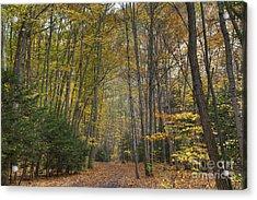 A Walk In The Woods II Acrylic Print by Michele Steffey