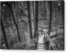 A Walk Through The Woods Acrylic Print by Scott Norris