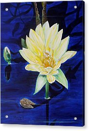 A Waterlily Acrylic Print by Marilyn  McNish