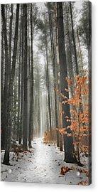 A Winters Path Acrylic Print by Bill Wakeley