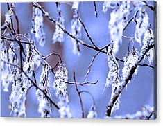 A Withered Branch Acrylic Print by Toppart Sweden