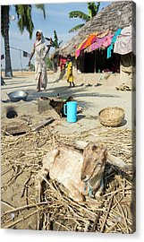 A Woman Subsistence Farmer Cooking Acrylic Print by Ashley Cooper