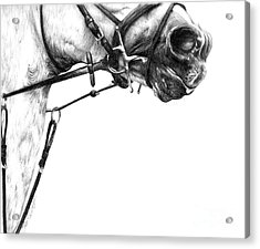 Above The Bit Acrylic Print by Sheona Hamilton-Grant