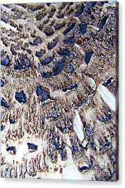 Abstract Accidental Sapphires Acrylic Print by Linsey Williams