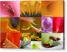 Abstract Fine Art Flower Photography Acrylic Print by Juergen Roth
