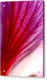 Abstract Petal Acrylic Print by Veronica Vandenburg