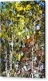 Abstract Tree Reflection Acrylic Print by Christina Rollo