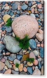 Acadia Rocks 5506 Acrylic Print by Brent L Ander
