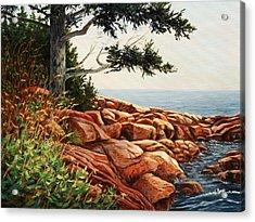 Acadia Tree Acrylic Print by Elaine Farmer