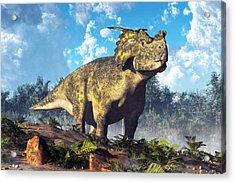 Achelousaurus Acrylic Print by Daniel Eskridge