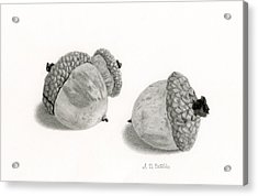Acorns- Black And White Acrylic Print by Sarah Batalka
