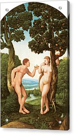 Adam And Eve Acrylic Print by Jan Van Scorel