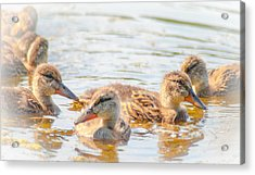 Adorable Brood Acrylic Print by Optical Playground By MP Ray