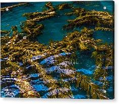 Adrift Acrylic Print by Lesley Brindley