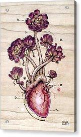 Aeonium Heart Acrylic Print by Fay Helfer