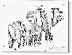 African Elephants Acrylic Print by Aidan Moran