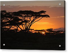 African Sunset Acrylic Print by Christa Niederer