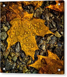 After An Autumn Rain Acrylic Print by David Patterson