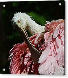 After The Bath Acrylic Print by Stuart Harrison