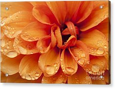 After The Rain Acrylic Print by Anne Gilbert