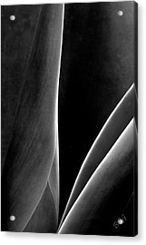 Agave Acrylic Print by Ben and Raisa Gertsberg