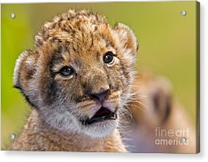 Age Of Innocence Acrylic Print by Ashley Vincent