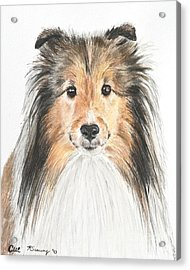 Agility Dog Sheltie In Pastel Acrylic Print by Kate Sumners