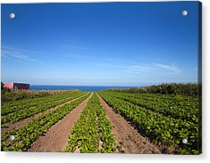Agriculture, Ardmore Head, Waterford Acrylic Print by Panoramic Images